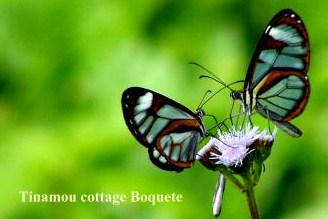 Glas_butterfly_ Tinamou Cottage